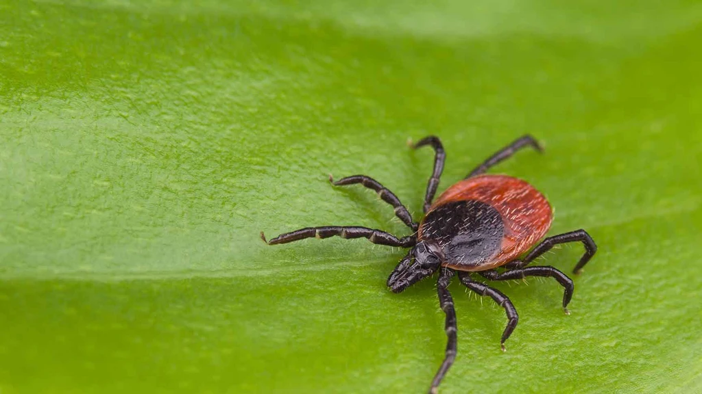 Lyme Disease: The Top Facts on Lyme Disease Symptoms, Myths, and Treatment Options. Learn How AHCC Can Help.
