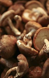 Medicinal Mushrooms: A Natural Medicine